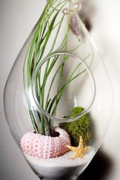 Air plant terrarium with sea urchin shell and star fish