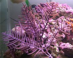 gorgonian coral | Fish In Third Quarter Of 2006