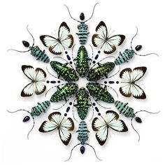 Christopher Marley insect art - stunning!
