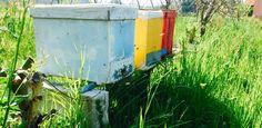 Arrivano anche  le api nei nostri campi...