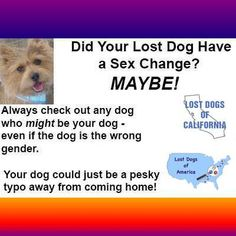 #LostDog #Tip Shelter staff are often in a hurry when entering dogs' info into their databases, and errors get made. Don't take for granted that the gender indicated on the website is correct. Always check out any dog that might be your dog - even if the gender is wrong.