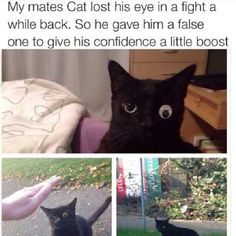 Cat lost one of his eyes in a fight, so his kind owner gave him a fake one to boost his confidence.