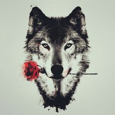 wolf, rose, and red Bild Mehr