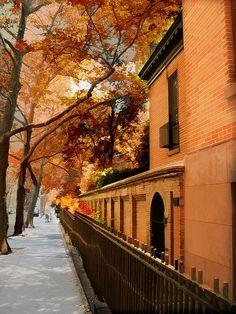 Autumn, New York City