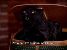 If we had to pick a favorite feline familiar, it would hands down be Salem the Cat from Sabrina the Teenage Witch. Salem Sabrina, Sabrina Cat, Cat Memes, Funny Memes, Hilarious, Stupid Memes, Funny Quotes, Ravenclaw, Salem Cat
