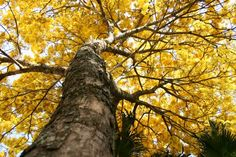 ipe tree! #IpeWood