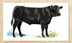 Black Angus cow for Atria Food services. Cow, Moose Art, Illustration, Artwork, Animals, Black, Work Of Art, Animales, Auguste Rodin Artwork