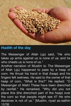 Hadith of the day Water made the corn heavier Prophet Muhammad Quotes, Hadith Quotes, Allah Quotes, Muslim Quotes, Islamic Quotes, Islamic Images, Islamic Dua, Islamic Pictures, Quran Quotes