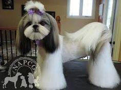 Resultado de imagen para asian fusion style groomer