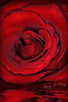 Simply Red by Jacky Parker Floral Art, via Flickr