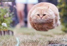 Je vous présente...le chat fusée.