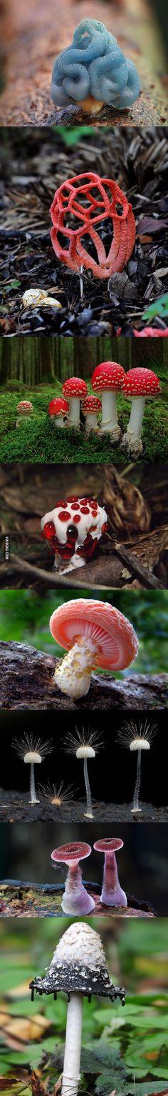8 Dangerously Beautiful Poisonous Mushrooms - 9GAG