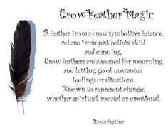 Crow feather magic *Please check your local and federal guidelines for feather collection and possession!*