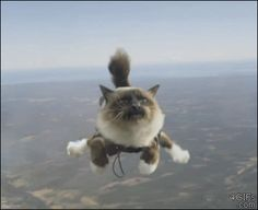 Funny Skydiving Cat Gif   Funny Joke Pictures