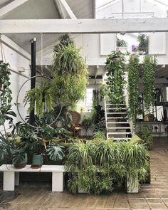 Plants for Indoor Industrial Environment . Plants for Indoor Industrial Environment . I Love Bringing Nature Indoors with Houseplants It Would Be Yucca Plant Indoor, Large Indoor Plants, Plant Images, Plant Pictures, Benefits Of Indoor Plants, Insect Repellent Plants, Best Office Plants, Chinese Money Plant, Plants Delivered