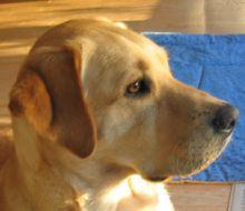 Zurich, 2011 Hero Dog Awards winner - Military Dog