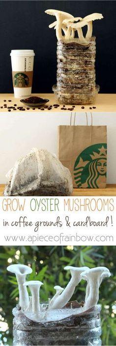 grow-mushrooms-on-coffee-grounds-apieceofrainbowblog Growing Mushrooms At Home, Garden Mushrooms, Edible Mushrooms, Stuffed Mushrooms, How To Grow Mushrooms, Hydroponic Gardening, Hydroponics, Organic Gardening, Container Gardening