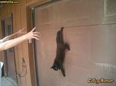 Suspended cat :)
