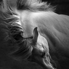 Equidae, a brand new and exciting concept in equine photography workshops. Bringing together three of the finest fine art horse photography specialists All The Pretty Horses, Beautiful Horses, Animals Beautiful, White Horses, Photography Workshops, Horse Pictures, Equine Photography, Horse Art, Animals And Pets