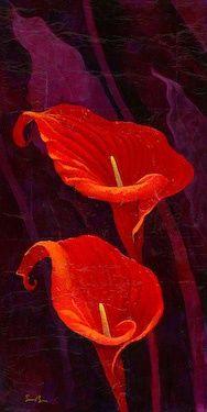 """Fantasia"" calla lillies by Simon Bull Exotic Flowers, Amazing Flowers, My Flower, Red Flowers, Flower Art, Beautiful Flowers, Calla Lillies, Calla Lily, Arte Floral"