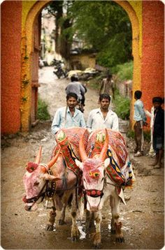 Connections: Oxen Cart in India #ExpediaWanderlust