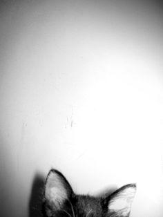 Cat. S)