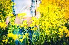 walking in the Yellow