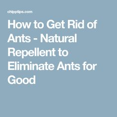 How to Get Rid of Ants - Natural Repellent to Eliminate Ants for Good