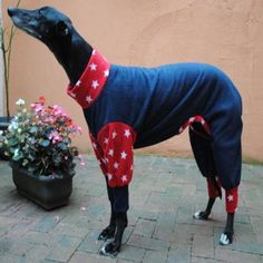 Greyhound Pyjamas America The Great