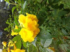 Love this sunny yellow stuff!
