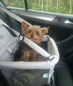 Hoje, vou passear  de carro com meus pais...
