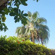 Jardin à #Agadir #palm #palmier #Maroc #Morocco #instafollow#followback #instafollow