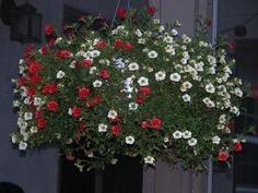 The 10 Best Flowers for Hanging Flower Baskets: Million Bells