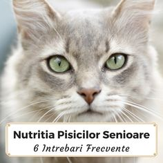6 Intrebari Frecvente Despre Hranirea Pisicilor Senioare Pictures Images, Cute Cats, Wildlife, Pets, Animals, Cat Breeds, Pretty Cats, Animales, Animaux