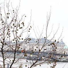 Winter in Paris. Photo courtesy of mybeautifulpari on Instagram.