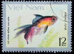 VIETNAM - CIRCA 1980: A stamp printed in Vietnam shows animal goldfish , circa 1980 Stock Photo