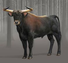 In case anyone is wondering what an Aurochs is, it's the wild ancestor of modern day cattle. They went extinct in 1627. I was reading about them on the internet a few years ago and one of the thing...