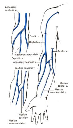 veins in the foot diagram ford 4000 ignition switch wiring of your arm blog for venipuncture dorsal aspect hand b main vein