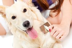 Brushing your dog will help loosen and remove dead hair before it has a chance to land on the floor. Depending on the breed of your dog, you may need to brush your dog every day. Some dogs only need to be brushed about once a week. Dog Grooming Business, Pet Grooming, Dead Hair, Dog Separation Anxiety, Cocker, Pet Dander, Retriever Puppy, Losing A Pet, Dog Training Tips