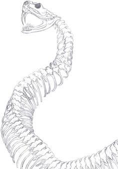 snake skeleton spine drawing - Google Search