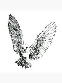 black and white portrait of a barn owl mid-flight Fly Drawing, Wings Drawing, Black And White Birds, Black And White Sketches, Owl Tattoo Drawings, Bird Tattoos, Feather Tattoos, White Owl Tattoo, Tattoo Black