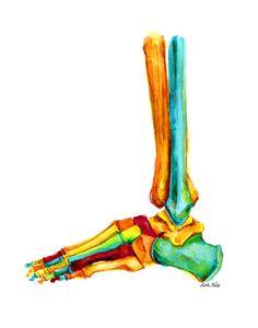 Pie y tobillo huesos imprimir acuarela grabado de por LyonRoad