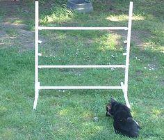"""Build Your Own Agility Course: Standard Jump. What you need: 4 PVC pipe 18"""" long; 2 PVC pipes 2 ¼"""" long; 3 PVC pipes 4' long; 4 T's; and 4 end caps split vertically."""