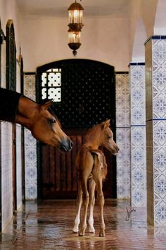 Mother & Baby in a luxury stable