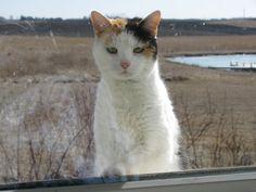 Let me in !!