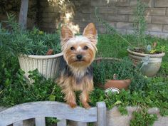 Spring tonics for our pets... we're not the only ones who could benefit from natures spring bounty!