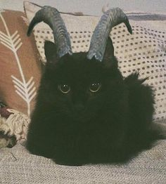 It's a black cat with horns 😍 Little demon Animals And Pets, Funny Animals, Cute Animals, Animal Original, Japon Illustration, Cat Aesthetic, Kawaii, Cat Memes, Cats And Kittens