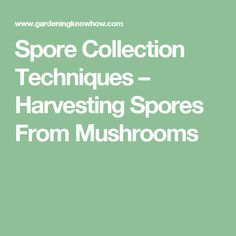 Spore Collection Techniques – Harvesting Spores From Mushrooms