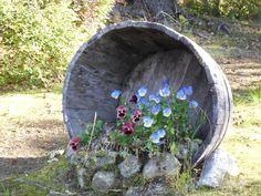 #Alaskawildflowers