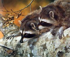 Double Trouble Raccoons by Carl Brenders